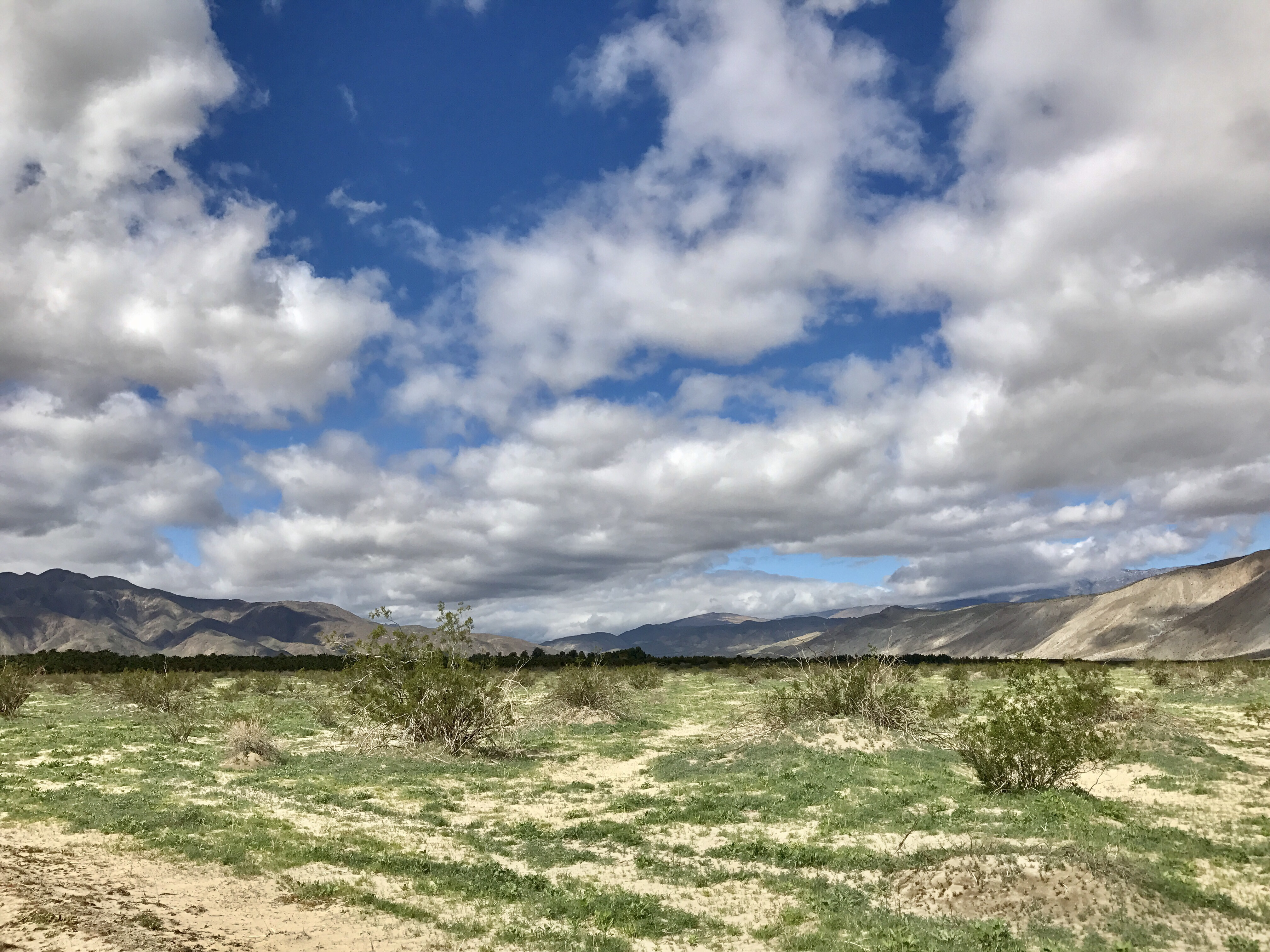 Anza Borrego Henderson Canyon Seeing Green A Super Bloom In Abdsp Travels With Callie
