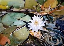 Lily Pond @ LA Arboretum 2010